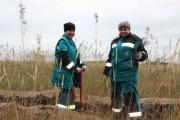 Добровольцы  СИБУР Тольятти  13 октября посадили 4 гектара леса.