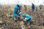 Участники  сбора макулатуры продолжили посадки леса!
