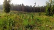 Мониторим весенние посадки леса.