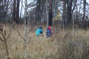 Лес восстановим!