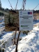 Наш лес растет!